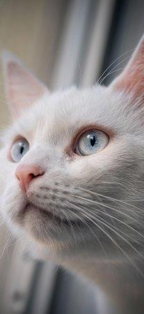 萌宠喵星人猫咪可爱霸气