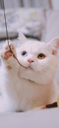 超萌可爱喵星人白色猫咪