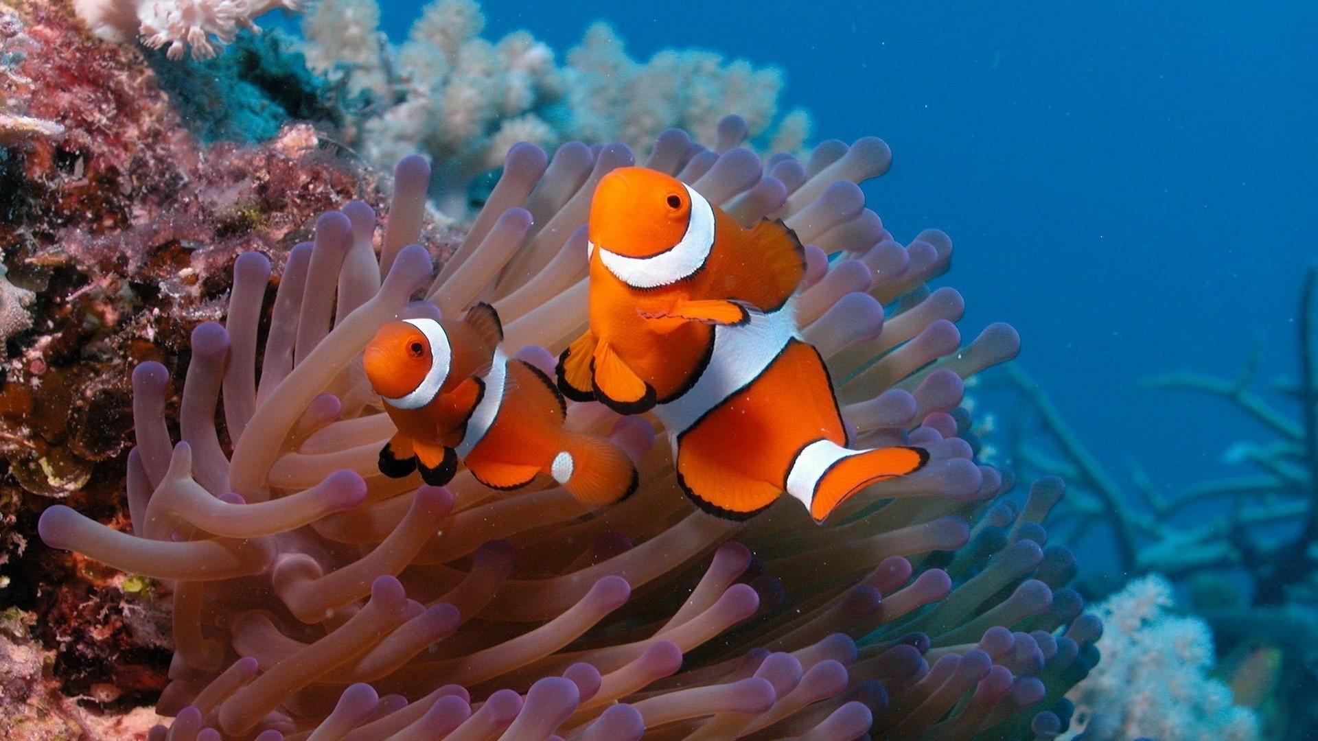 可爱海底世界高清电脑桌面