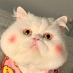 <b>唯美胖猫咪2021最新头像 高清适合做2021最新头像</b>