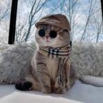 帅气猫咪头像高清 时尚穿衣服的土豪猫咪图片头像