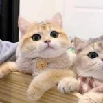 <b>超萌可爱的猫咪治愈系情头图片</b>