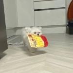 超萌超可爱的吃货狗狗叼东西头像图片