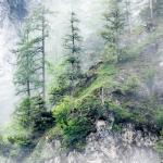 山上云雾缭绕的高清写真 树林高山白云